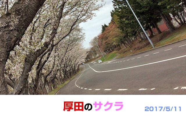 厚田・石狩の戸田記念公園の桜。