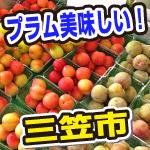 北海道の美味しいプラム!三笠市の道の駅で買いました。甘い!
