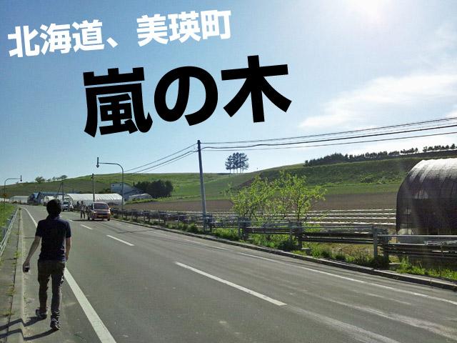 嵐の木、5本バージョン。北海道の美瑛町。
