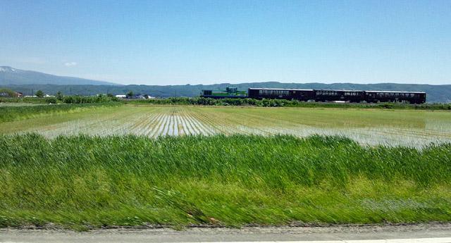 富良野はのんびり。田んぼと列車