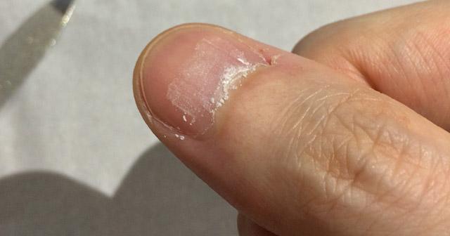 削るとツメの粉が。