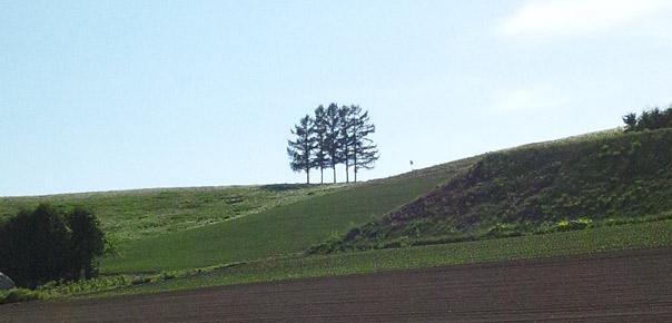 5本松、嵐の木