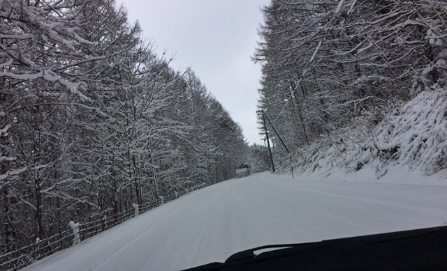 雪の林を走行
