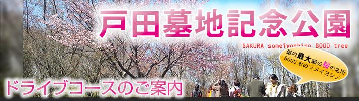 石狩市 佐藤水産と厚田の桜