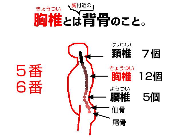 背骨の胸辺りを胸椎(きょうつい)と呼ぶ