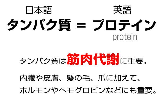 プロテインは日本語で「タンパク質」