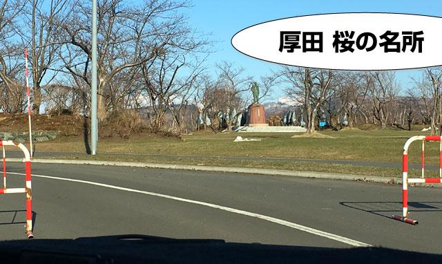 戸田記念公園は桜の名所